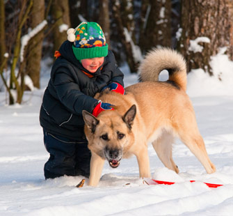 snow-kids Dog